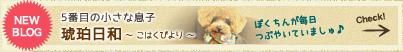 5番目の小さな息子 琥珀日和